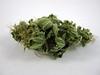 Dried Flowers Of Cannabis Indica (farmer dodds) Tags: flower cannabis hemp entheogen indica cannabaceae cannabisindica