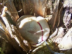 Napping in a stump