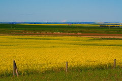 Lines of cultivated prairies (JoLoLog) Tags: canada joe alberta canolafields canonxsi