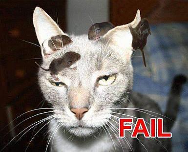cat mouse fail