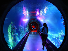 SEA LIFE Ocean Tunnel (gbrummett) Tags: ocean blue fish water fun aquarium cool az sealife sharks rays arizonamillsmall tempearizona img4032 sealifeaquarium canon15mmf28fisheyelens oceantunnel grantbrummett canon5dmarkiidigitalcamera