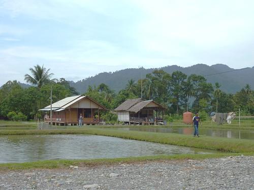 Bukit Lawang - Région