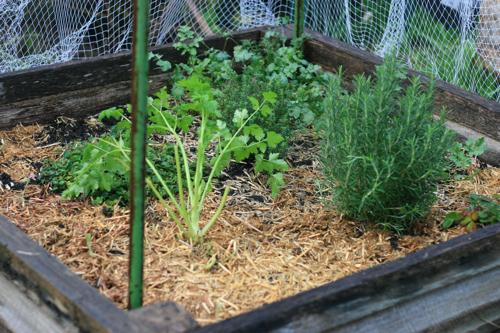 the 'herb' garden