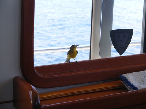 Feathered Stowaway