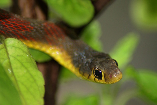 Tale of a Snake I