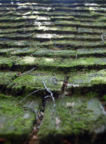 A Mossy Roof