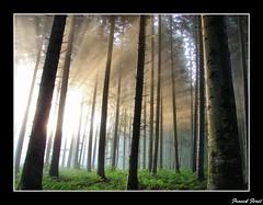 rayons dans la foret de myon (francky25) Tags: de la foret hdr dans rayons doubs comté franche myon flickraward passiondéclic
