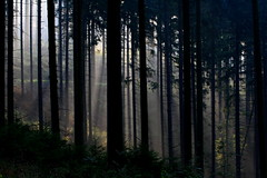 Misty morning Spotlights.... (rolfspicture) Tags: trees nature forest landscape flare sunrays sauerland lightspots