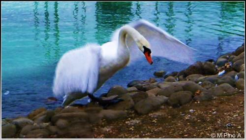 El vuelo del cisne by Arice39