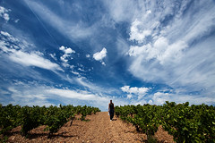 Saint Chinian Vineyard (DolliaSH) Tags: travel blue vacation sky holiday france tourism field clouds canon vineyard europe mediterranean tour place wine wolke wolken visit location tourist journey nubes grapes nuvens destination traveling visiting nuage nuages roussillon southoffrance touring languedoc nube beziers syrah 1022 skyer carignan canaldumidi wolk kumo stchinian grenache mistral hrault moln saintchinian nubi canonefs1022mmf3545usm midipyrnes aoc mourvdre canoneos50d cinsaut oblaka dollia dollias sheombar dolliash