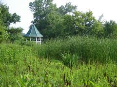 Wetland Retreat (Urban Woodswalker) Tags: summer green nature beautiful illinois midwest peaceful wetlands meditation forestpreserve lovely grassland cookcounty chicagoland quiety urbanwoodswalker