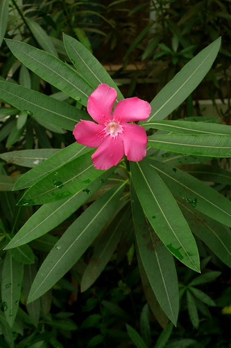 botanic - 05