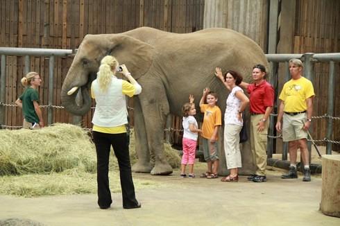 Elefantentag