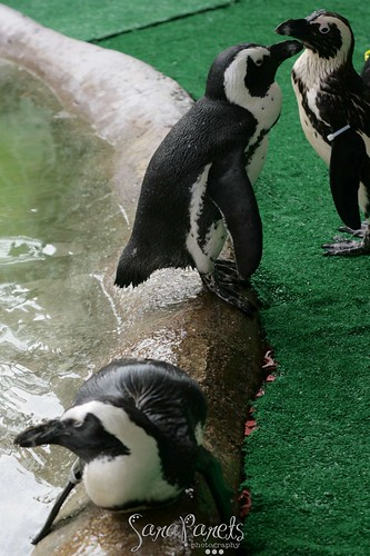 Penguins!!!!!!!!!!