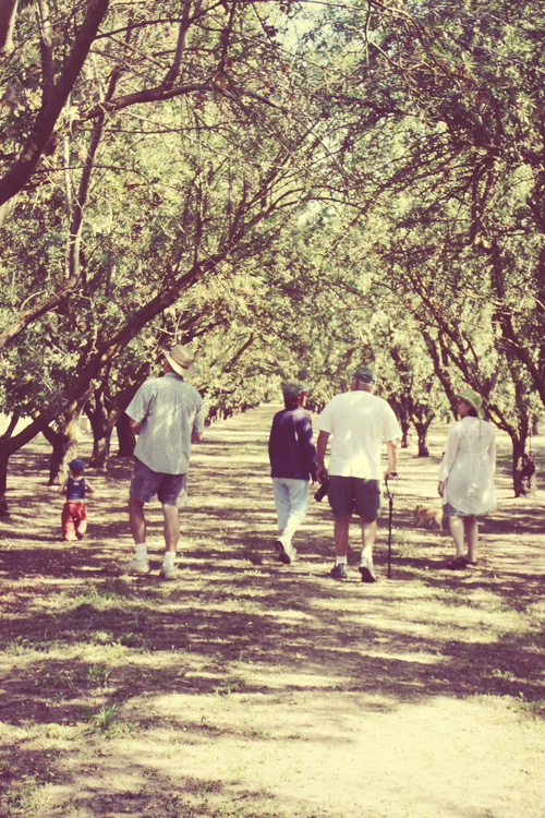 family walk in the orchard