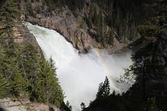 Upper Yellowstone Falls rainbows (montanaphotos) Tags: waterfall rainbow yellowstonenationalpark yellowstone wyoming yellowstoneriver yellowstonefalls upperfalls yellowstonepark t1i