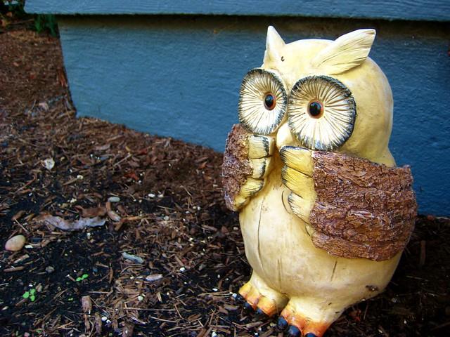 2010-08-25 owlie 011