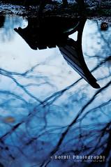 reflection (Bornil) Tags: park blue reflection water bench upsidedown yoyogipark yoyogikoen d300 bornil bornilphotography
