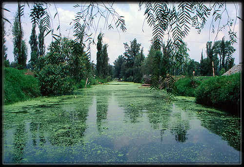 chinampas,canaux,Xochimilco