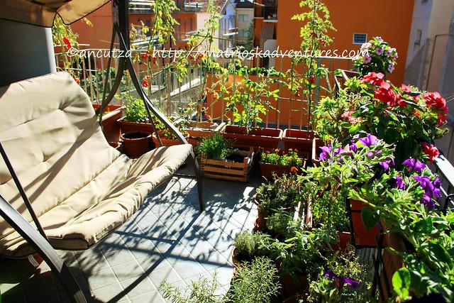 foto il mio orto sul terrazzo