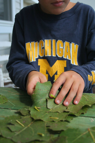 leaf crown making