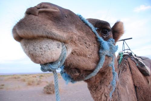Sahara, Morocco - 161
