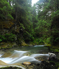 Jungle (Fish as art) Tags: longexposure forest river stream salmon wald metsä skov skogen natuurfotografie ljósmyndun náttúru salmonrivers luontokuvaus naturfotografi természetfotózás naturfotografin náttúruljósmyndun