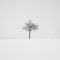Silence (agavephoto) Tags: blackandwhite white snow newmexico tree square minimal minimalism simple lonetree