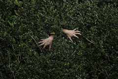 Emergence 2/3 (quincyeiwoo) Tags: emergence conceptual surreal bush nature leaves portrait concept emerging hand hands