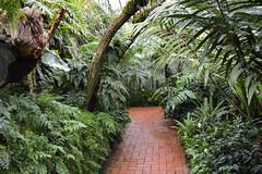 DSC_0143 (hanno_pix) Tags: garden flower nature tropic path pfad