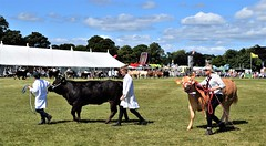 Malton Agricultural Show - The Big Parade (Paul Thackray) Tags: yorkshire northyorkshire maltonagriculturalshow scamptonpark grandparade cattle 2017