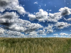 MTBTour über die schwäbische Alb zur Donau (Blende2,8) Tags: schwäbischealb iphone himmel weizenfelder weizen wolken badenwürttemberg deutschland