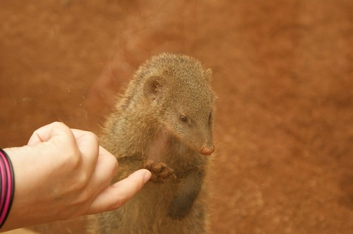 Mongoose High-Five
