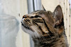 Gato Insetívoro (Kitty & Kal-El) Tags: pet animal cat insect feline gato inseto felino kalel impressedbeauty