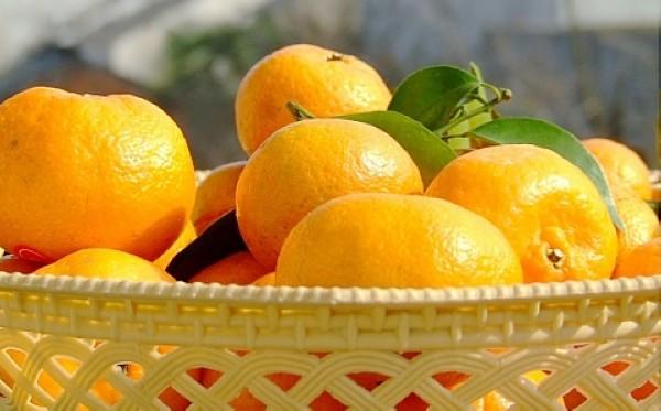 fruitandcharacter7