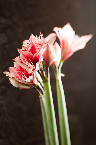 1006 flowers #7