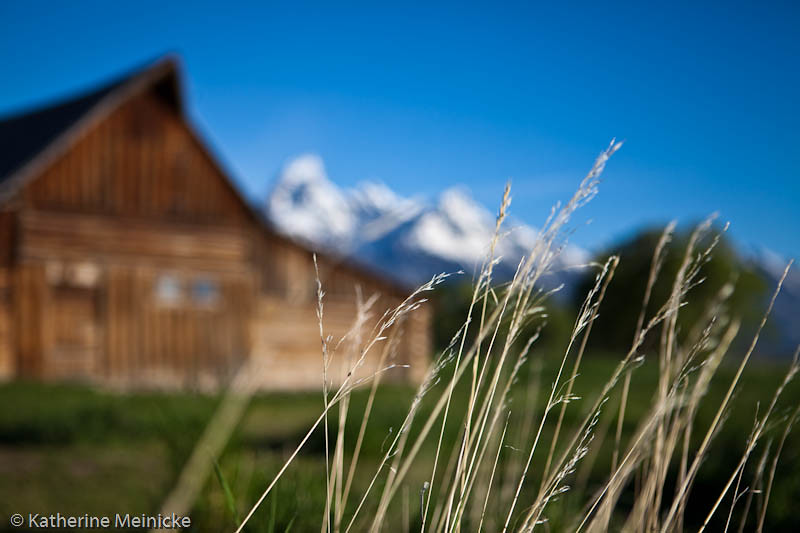 Mormon Row, Grand Tetons