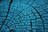 . (Garuna bor-bor) Tags: blue texture textura azul geotagged turquoise bleu tronco coupe section 2010 tronc turquesa sección urdin turkesa enbor ehundura geolokalizatua geokokatua ebaketa