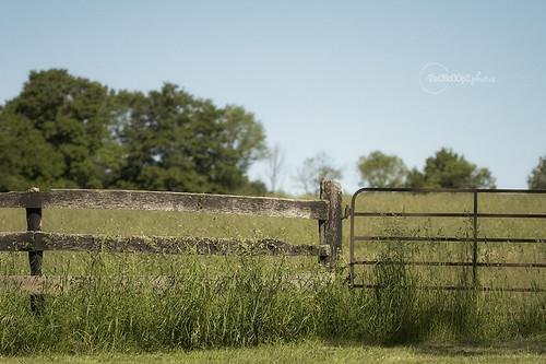 fence friday! 183/365