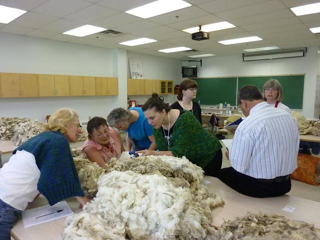 Wool Judging 05