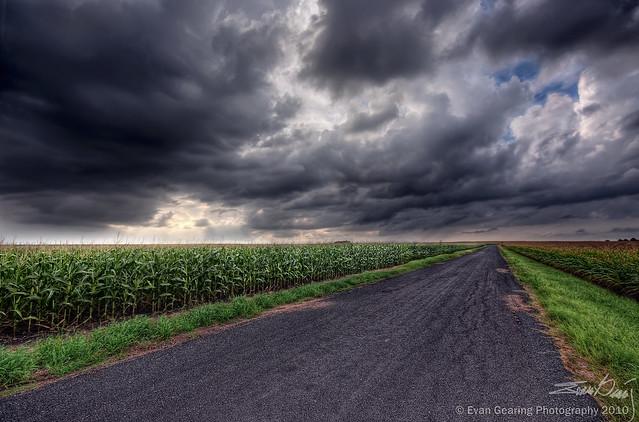 Gloomy Cornfield