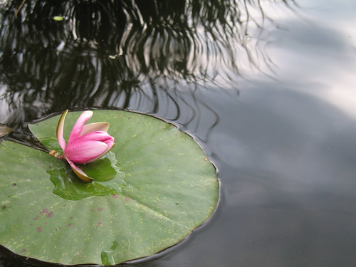 Abkühlung im Vahrner See