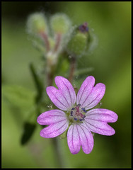 (stavlokratz) Tags: madrid espaa flower fleur flor fiore boadilladelmonte