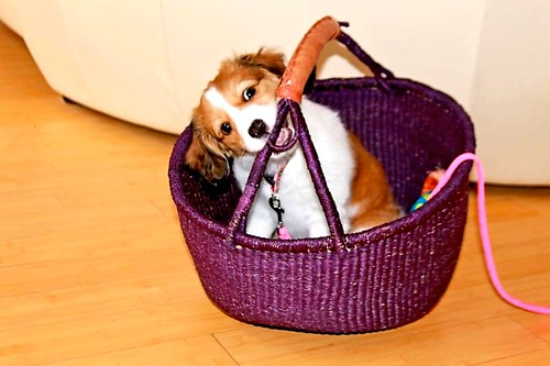 Cecily in basket