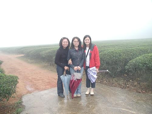 在濃霧中的慈濟茶園中合照
