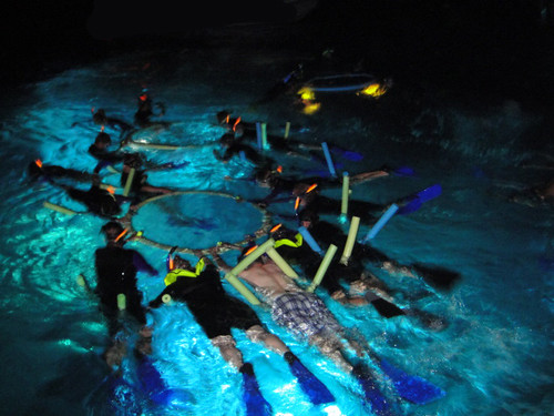 Swim with Manta Rays Big Island Hawaii