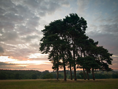 In Hope (Anologital) Tags: uk morning sky pine sunrise northamptonshire olympus zuiko northants 1122 uplands fawsley daventry e410