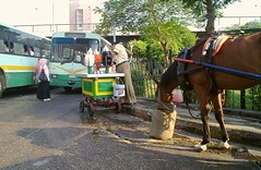 Horse or Bus !!! (Hossam all line) Tags: