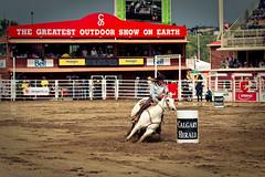 Barrel Racing (Calgary Stampede) Tags: canada calgary rodeo stampede barrelracing calgarystampede2010