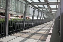 Lohas Park, Hong Kong.... long long walk for a train (Daryl Chapman Photography) Tags: hot canon hongkong crazy walk sigma 7d 1020mm mtr f35 lohaspark